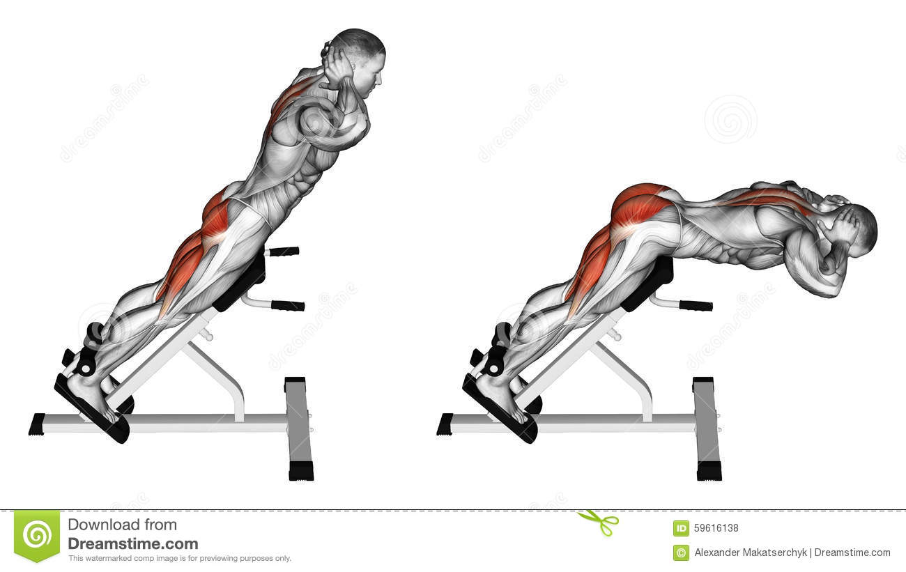 Hyperextension. Exercising for bodybuilding Target muscles are marked ...
