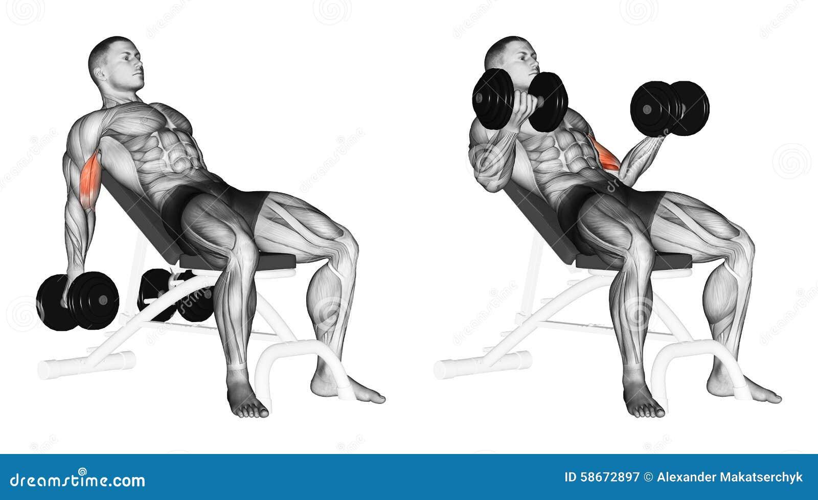 Exercising La elevación de las pesas de gimnasia para los bíceps muscles en un banco de la pendiente