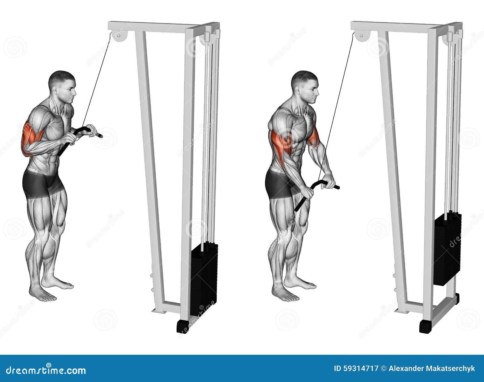 Exercising La extensión de manos en un simulador del bloque muscles el bíceps y el tríceps