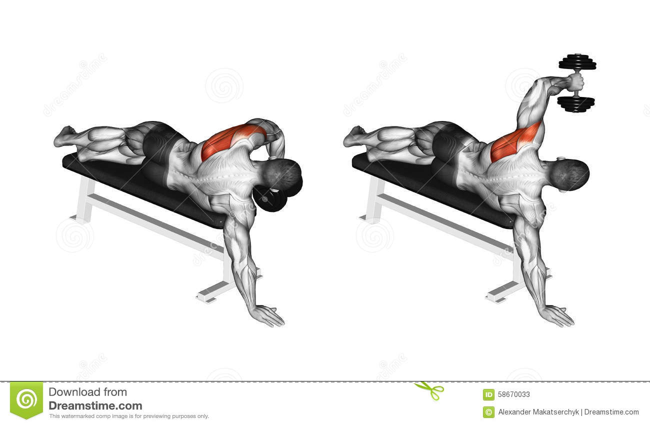 Exercising. Lead Hand With A Dumbbell Rear Deltoid Stock ...