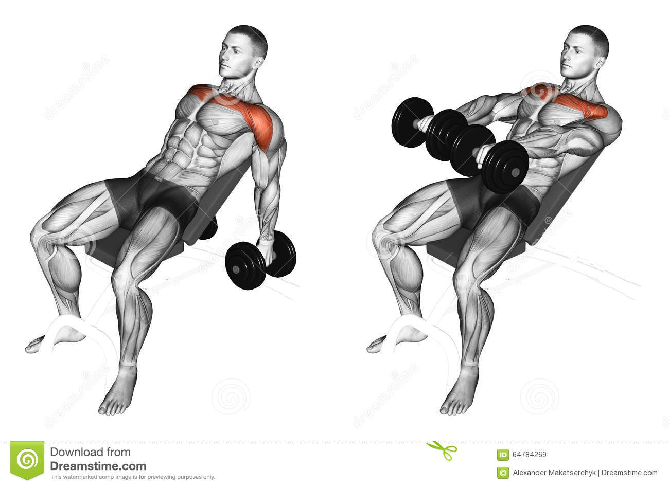 Exercising. Lifting Arms With Dumbbells On Incline Bench Stock ...