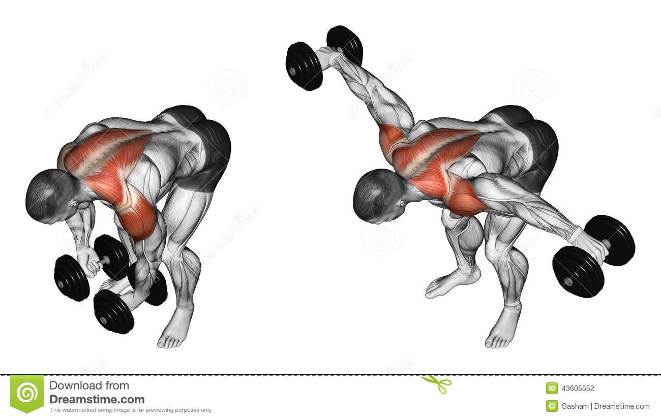 Exercising. Lifting Dumbbell In Hand To Lean Forwa Stock