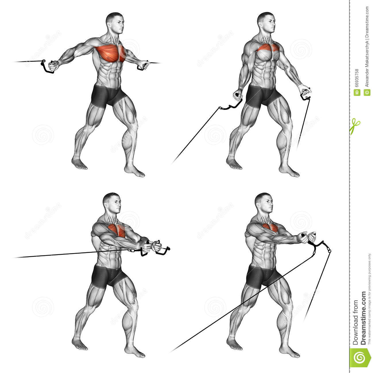 Exercising. Middle and Low cable fly