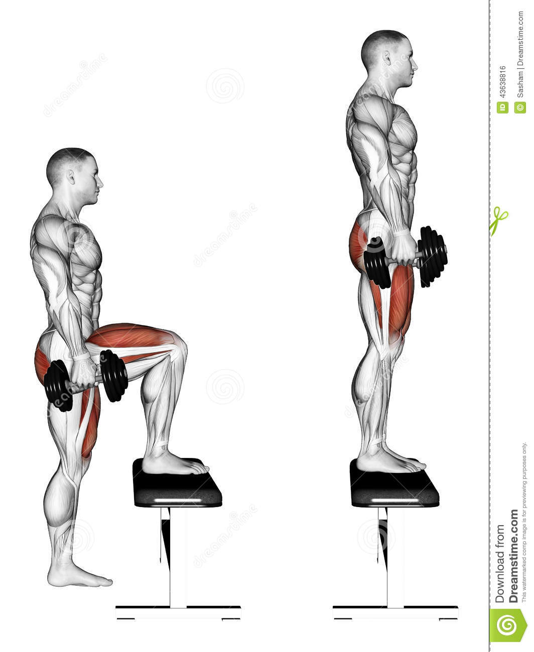 Knee On Bench Dumbbell The Best 28 Images Of Knee On Bench Dumbbell Seated