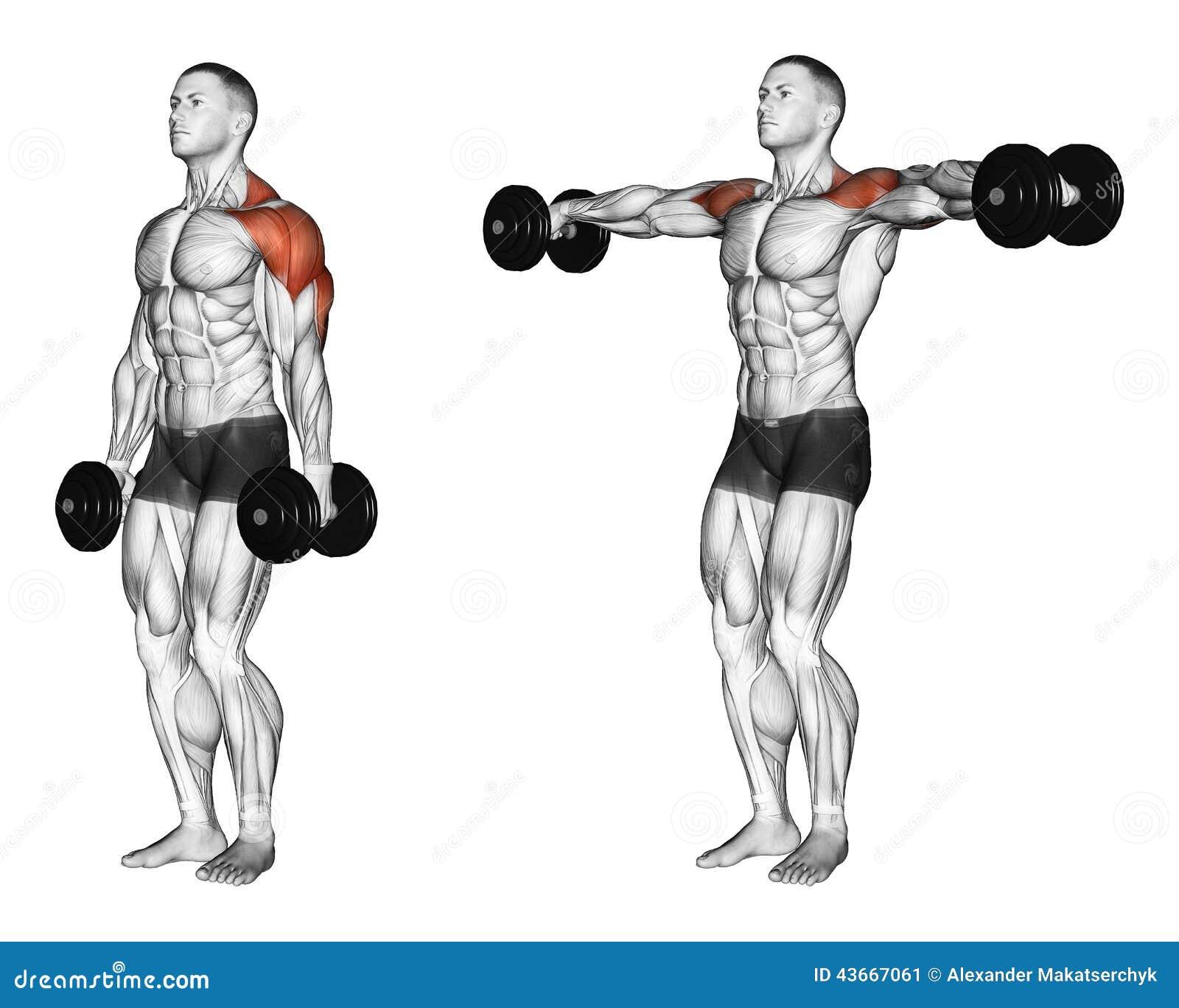 Exercising Pesa de gimnasia de elevación disponible