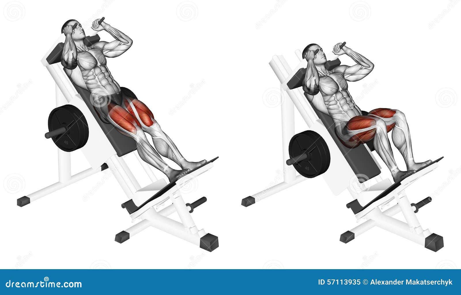 Exercising Posiciones en cuclillas del corte