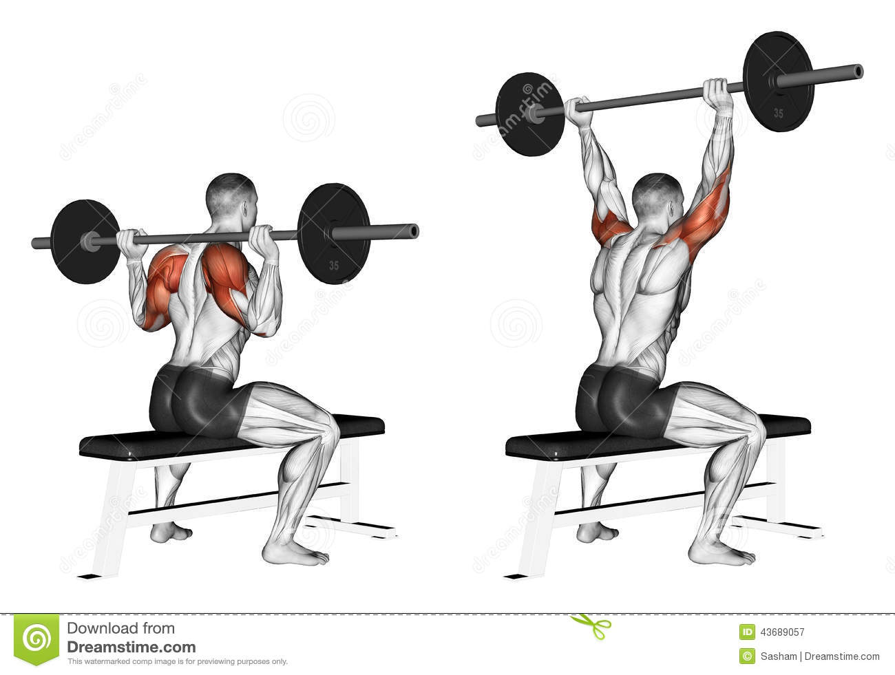 Exercising. Press of a bar because of the head sit