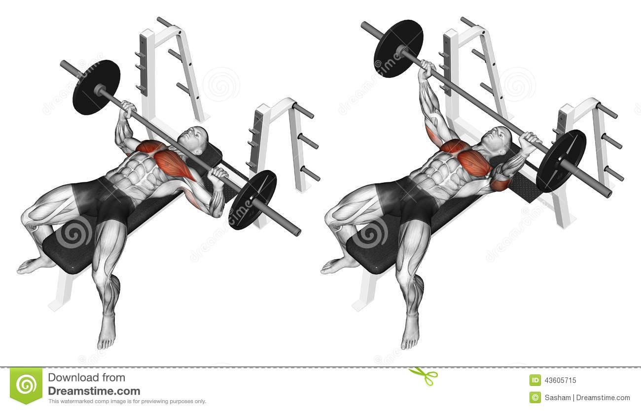 Exercising. Press Of A Bar, Lying On The Bench Stock Illustration - Image: 43605715