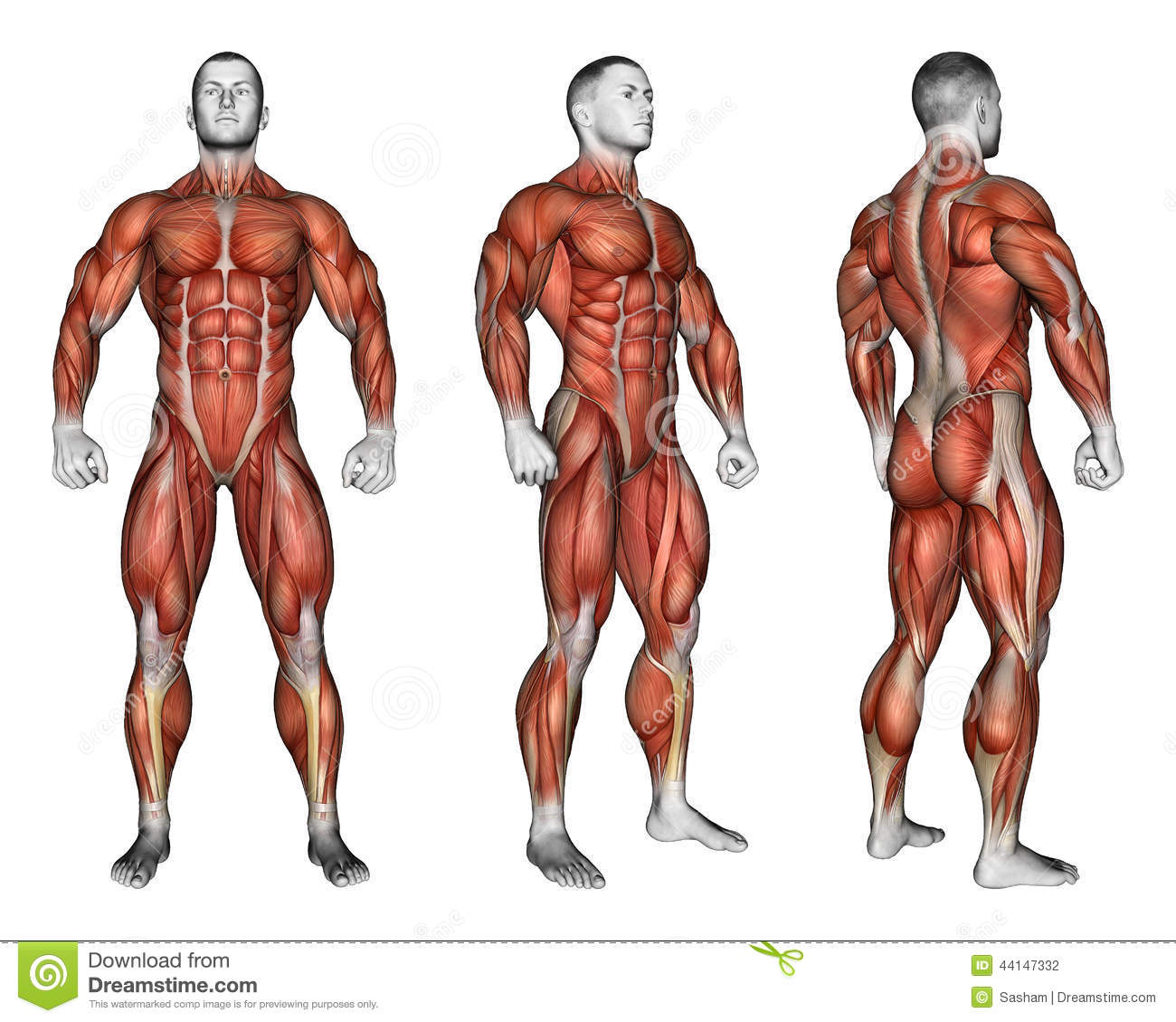 Exercising Projection Of The Human Body Showing Stock Illustration