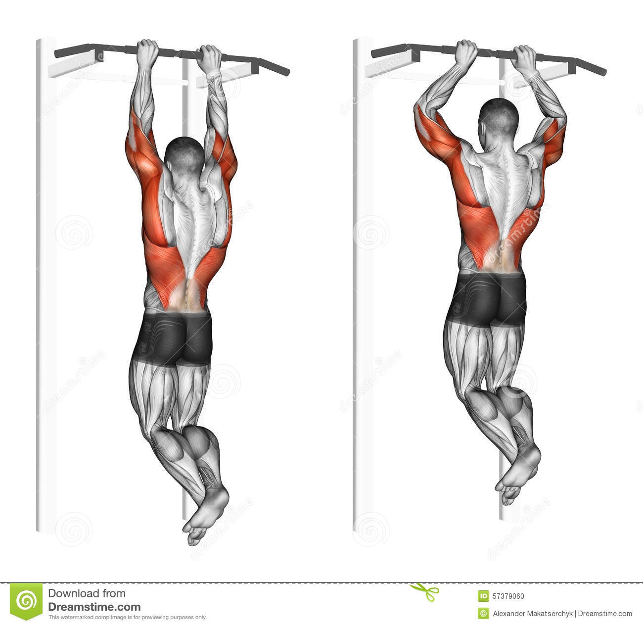 Exercising Pull Ups On The Brachialis Stock Illustration