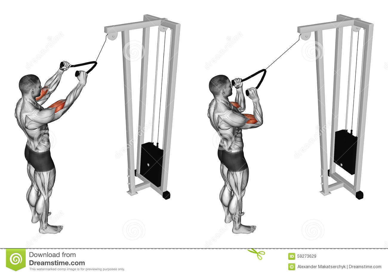 Exercising. Pulldown Exercise The Muscles Of The Biceps ... | 1300 x 923 jpeg 85kB