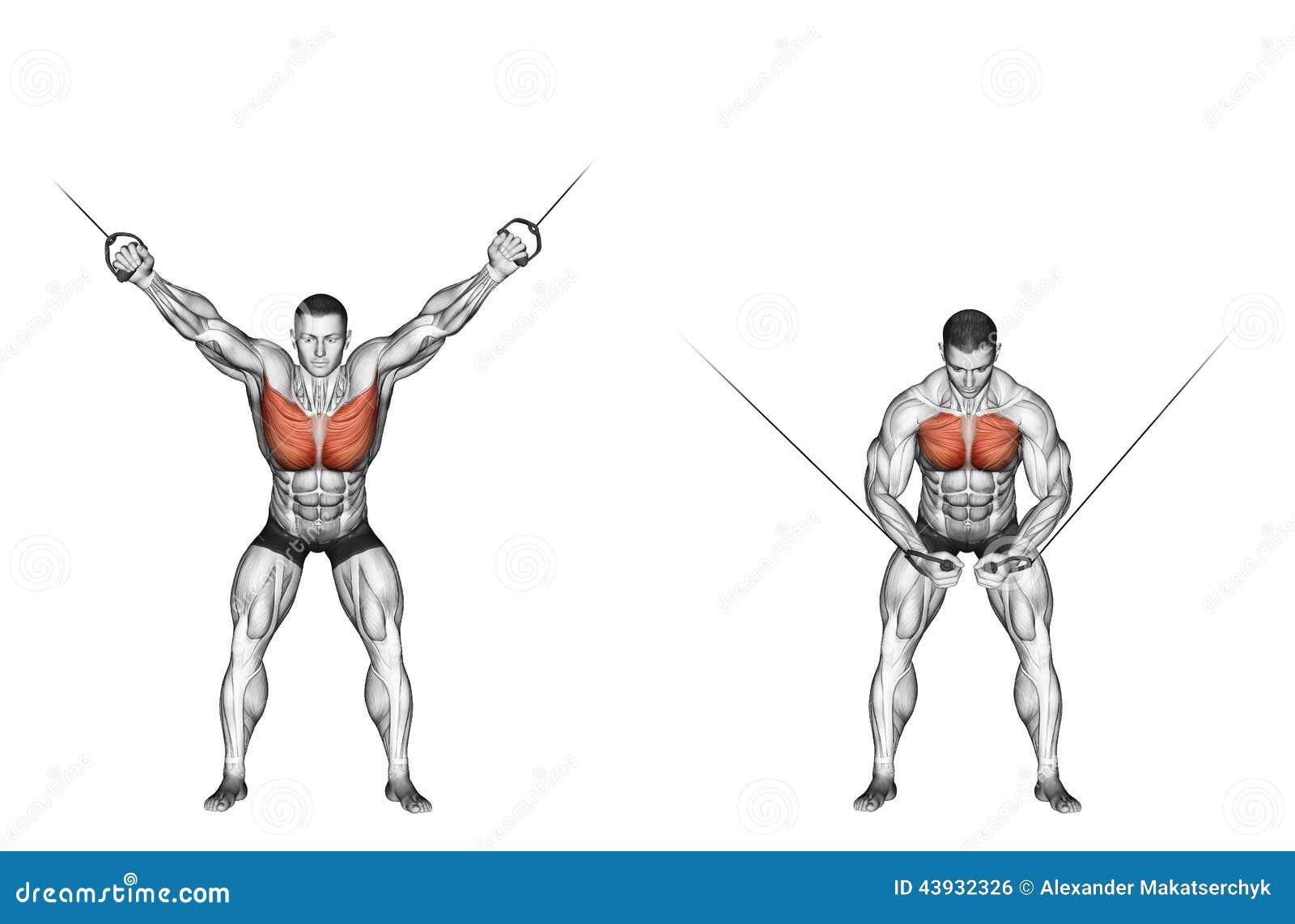 Exercising Reduction Of The Upper Blocks Cross Ov Stock