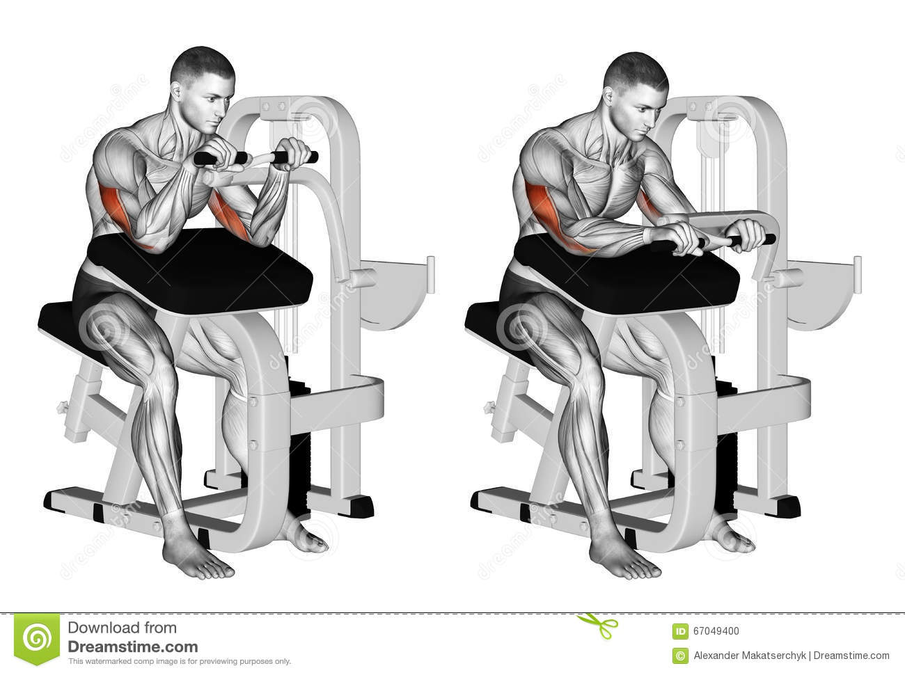 Exercising. Selectorized Triceps Extension Stock ...