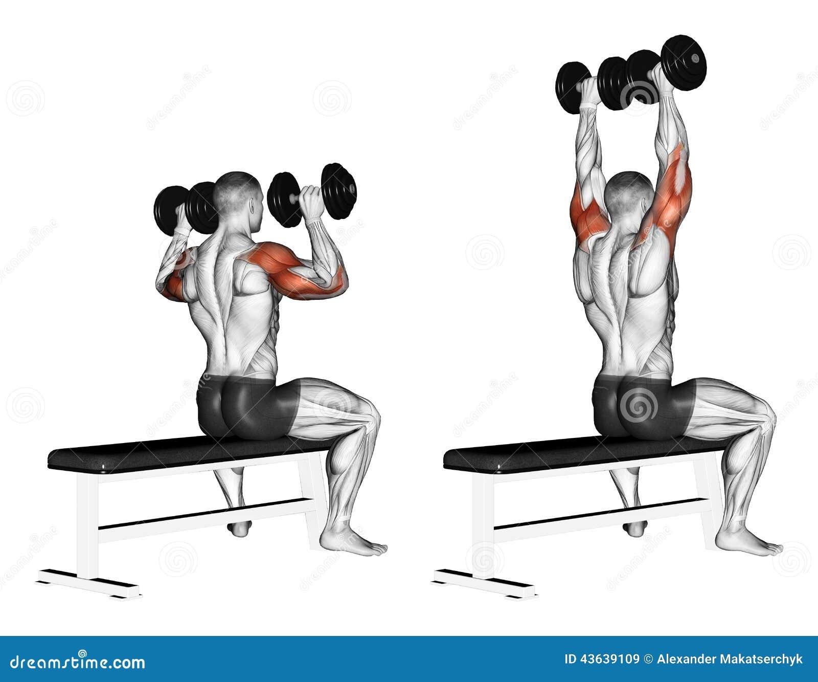 Exercising Sentada de la pesa de gimnasia del banco