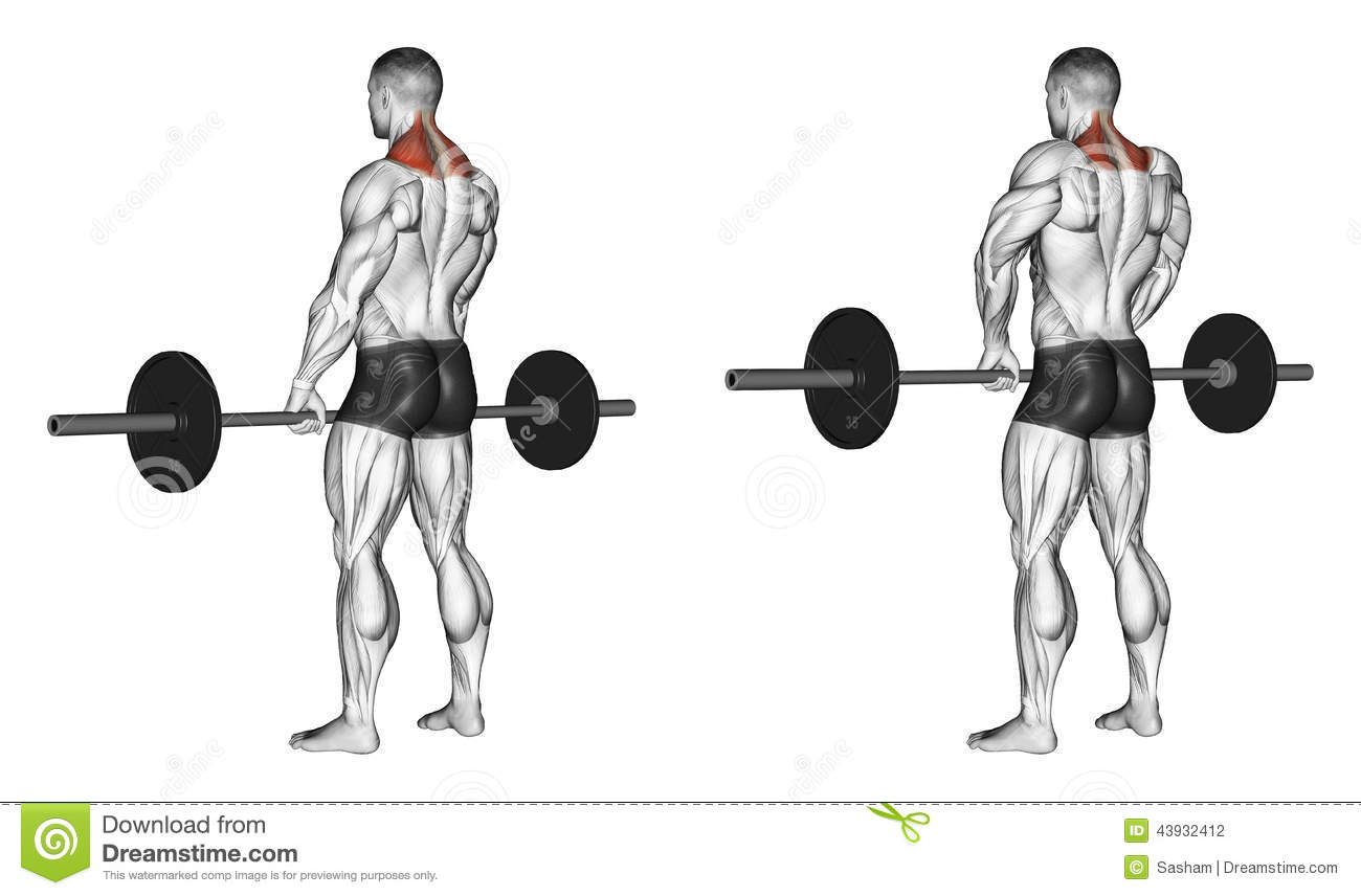 Exercising. Shrugs With Barbell Stock Illustration - Image ...