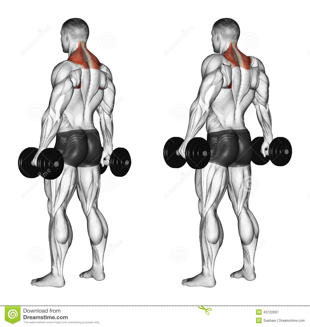 Exercising Shrugs With Dumbbells Stock Illustration