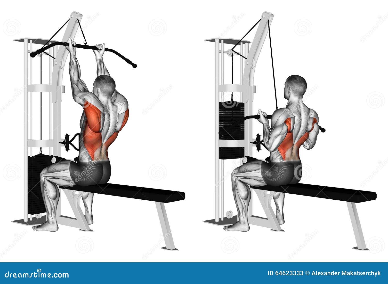 muscular reverse