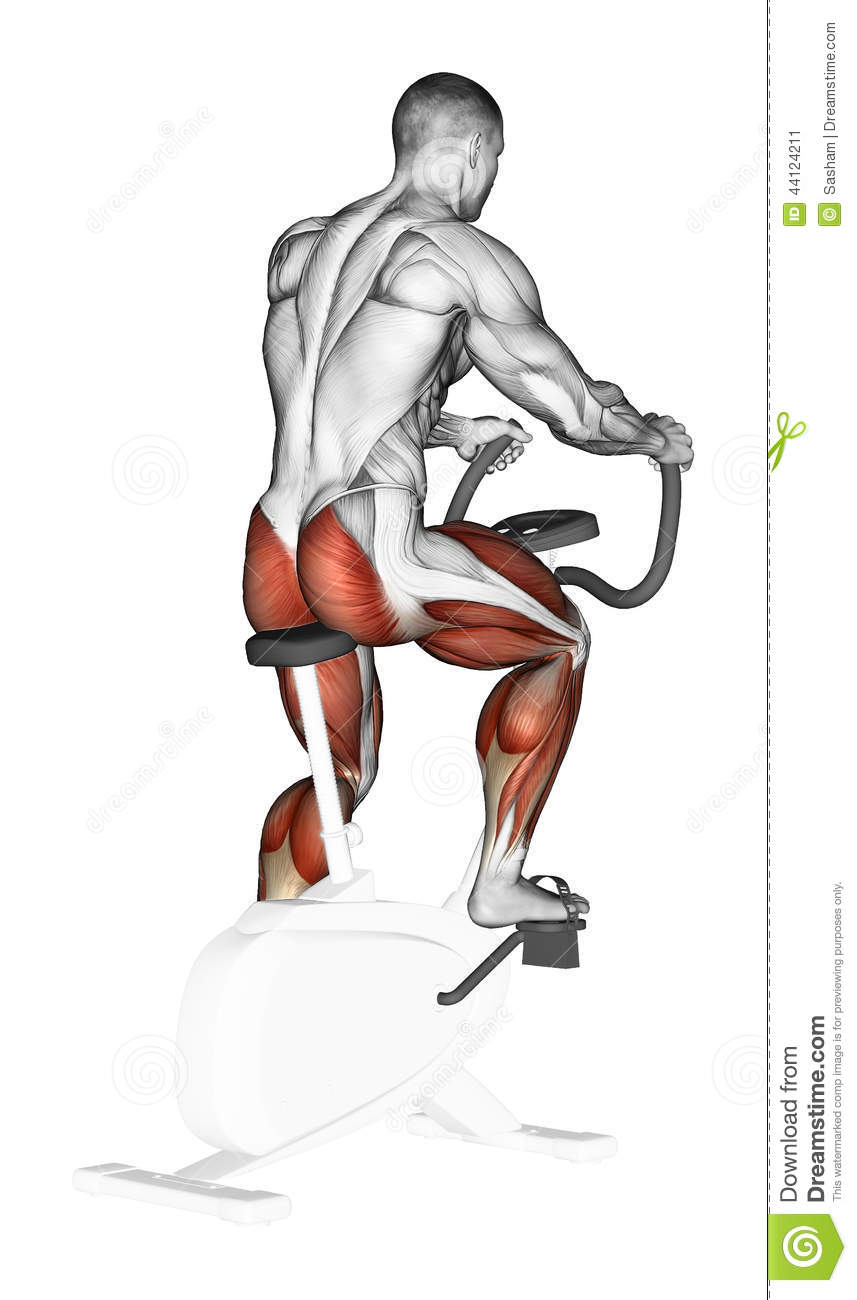 Exercising Training On A Stationary Bike Stock Illustration