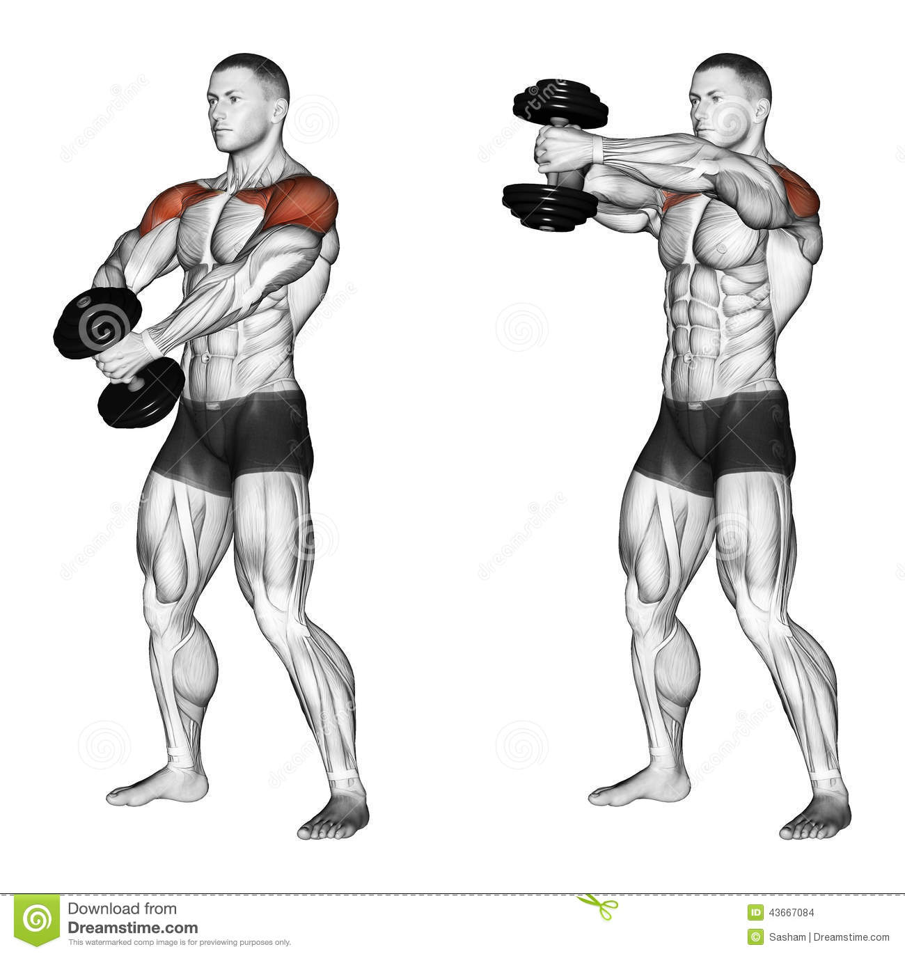 list of dumbbell exercises by muscle group dumbbell - HD1300×1373