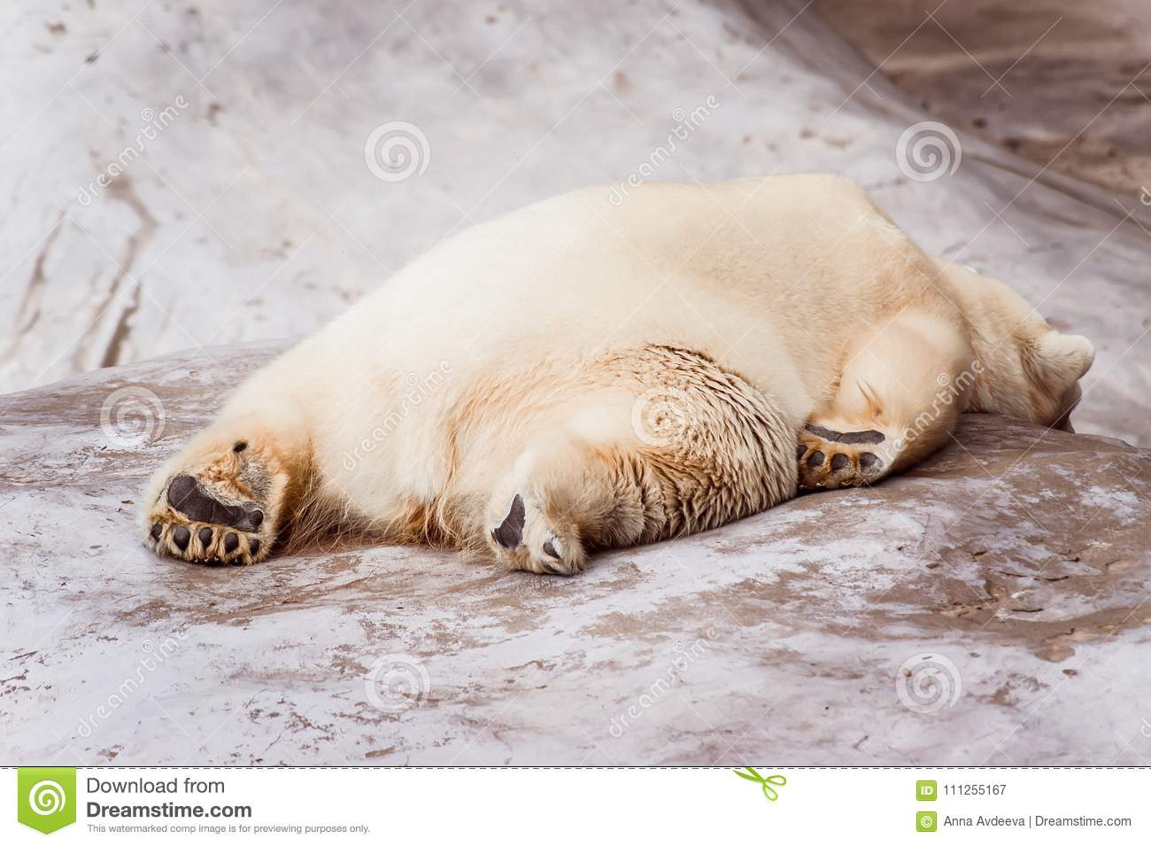 Exhausted white bear lies on the stone