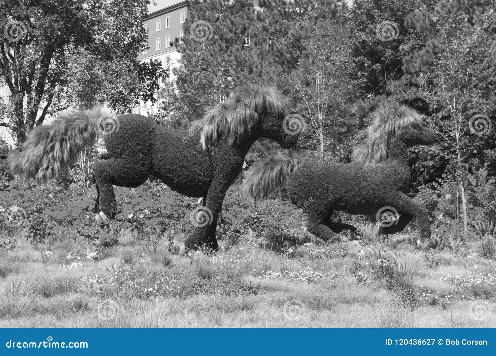 Exhibición de MosaïCanada 150 de caballos
