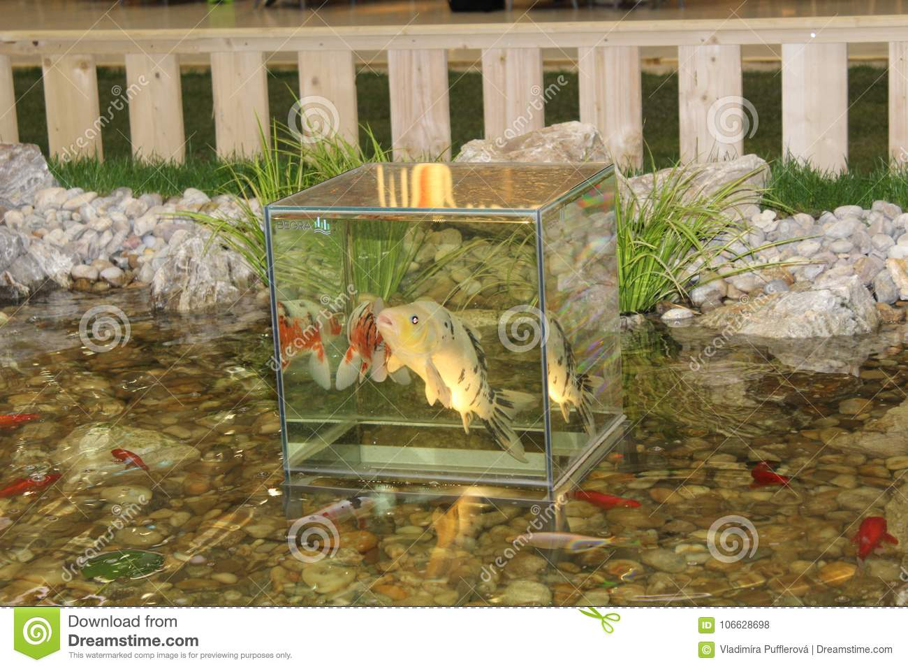 Glass Cube Enabling The Pond Fish To Watch The World Around The Pond Stock Photo Image Of Aquarium Stone 106628698