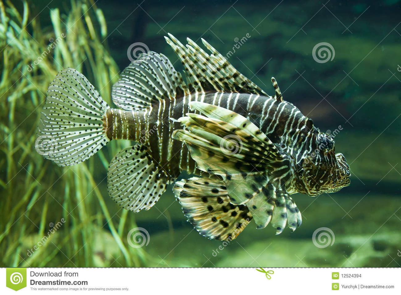 Exotic aquarium fish stock images image 12524394 for Exotic tropical fish