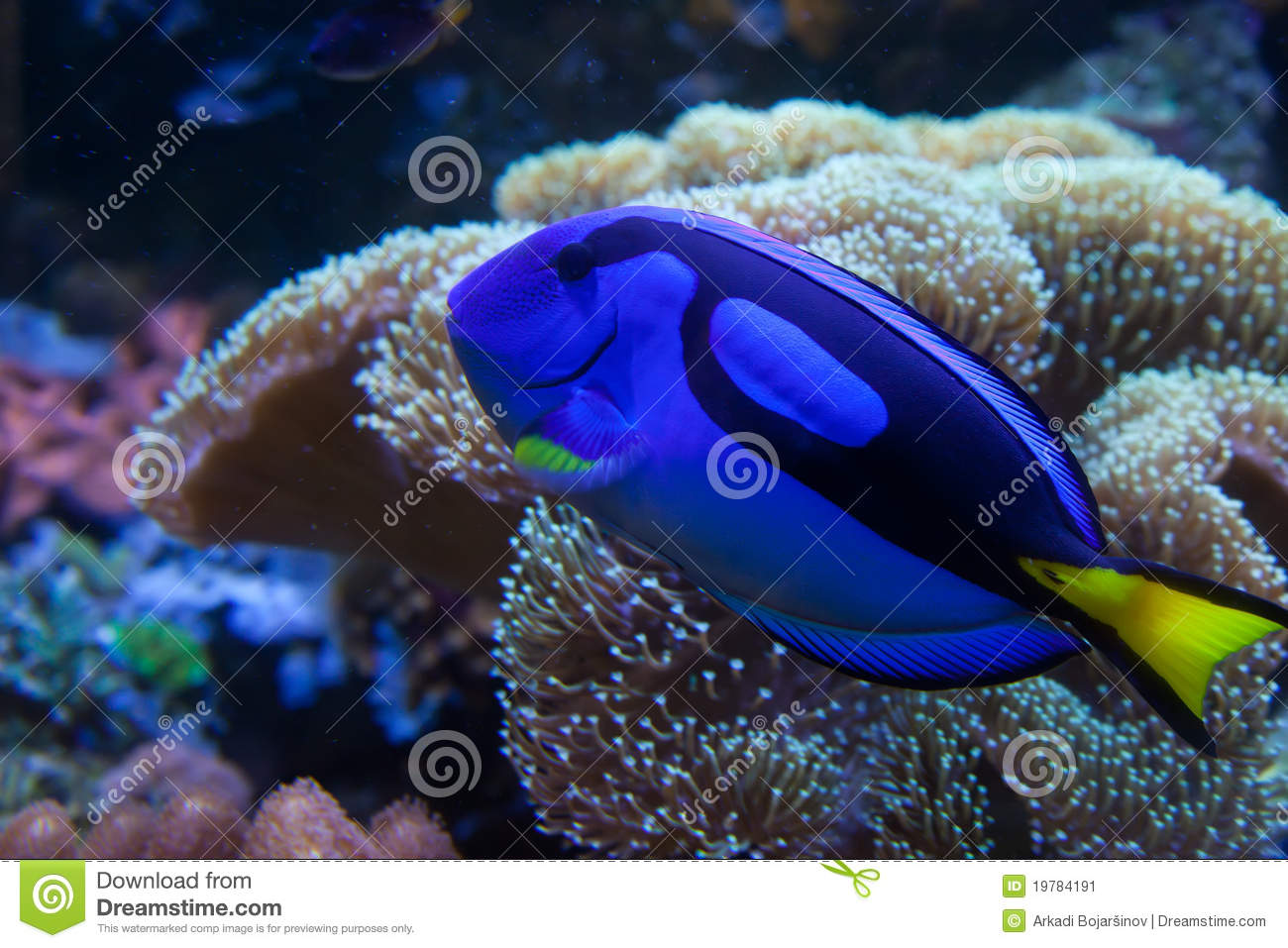 Aquarium fish design joy studio design gallery best design for Big freshwater aquarium fish