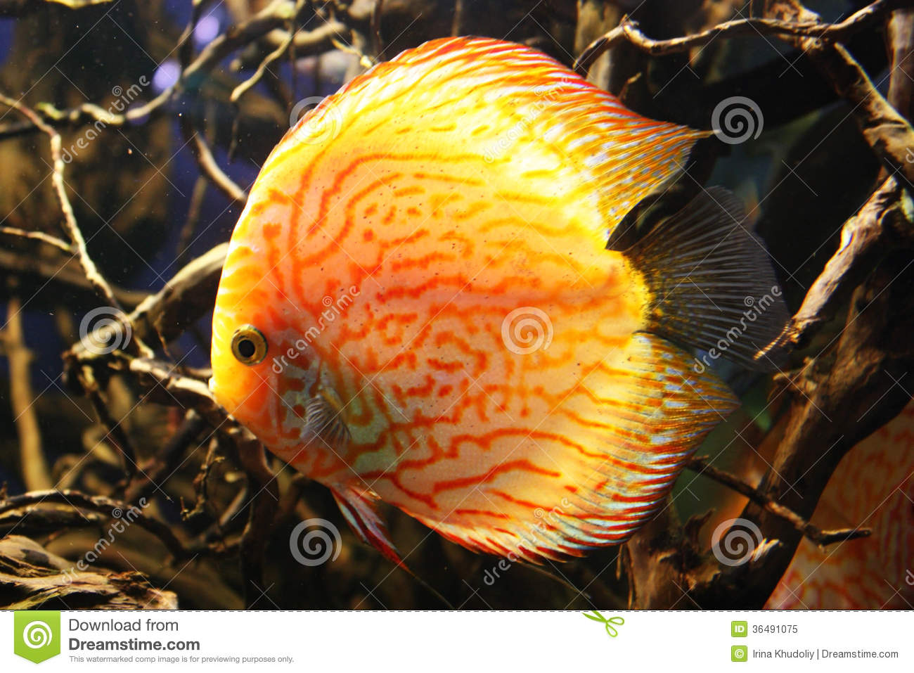 Exotic aquarium fish stock image image of wild tropic for Fish and pets unlimited