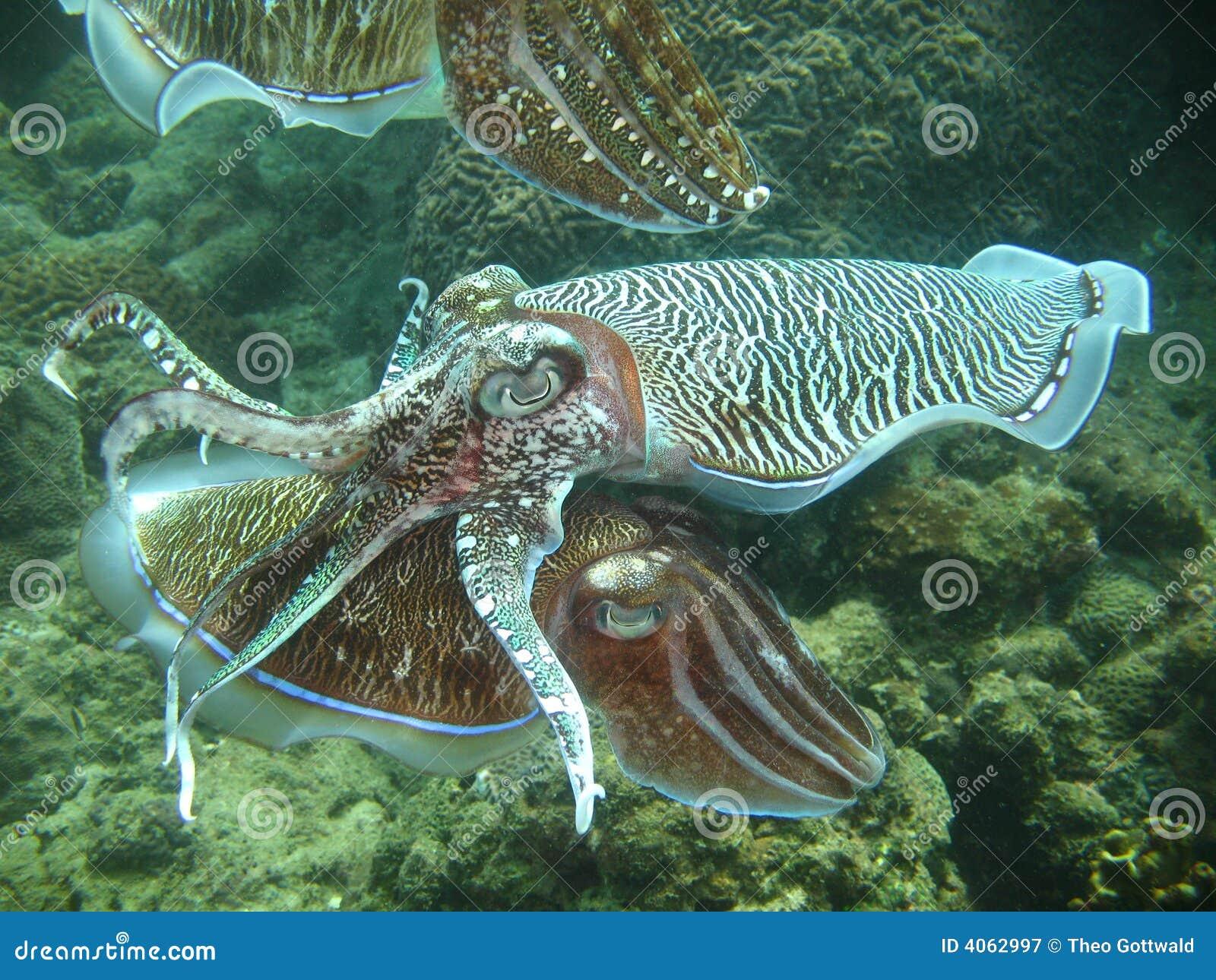 Exotic Aquatic Sea Life Royalty Free Stock Photography - Image ...