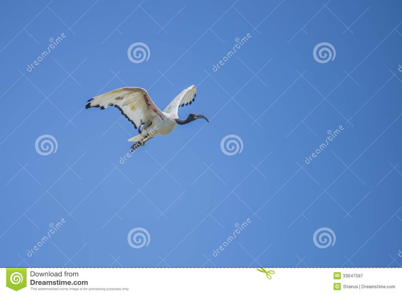 Royalty Free Stock Photography Exotic Birds Flying Picture Shot Zoo La...