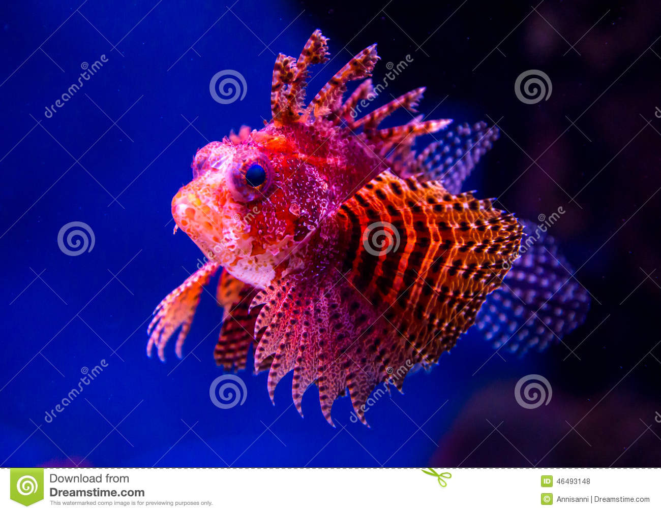 Exotic Brightly Decorated With Red-orange Fish Stock Photo - Image ...