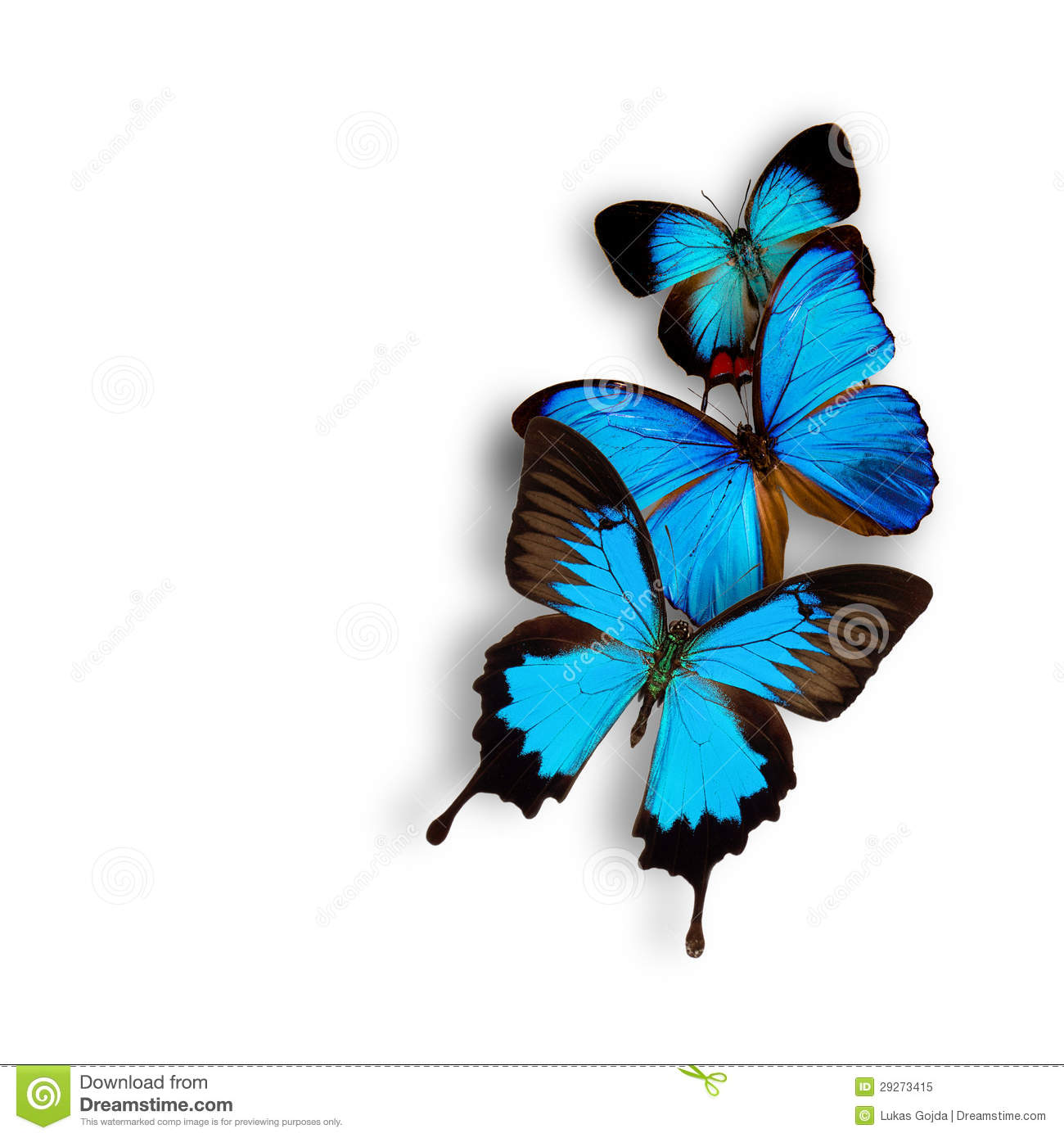 Exotic Butterflies Royalty Free Stock Photo - Image: 29273415