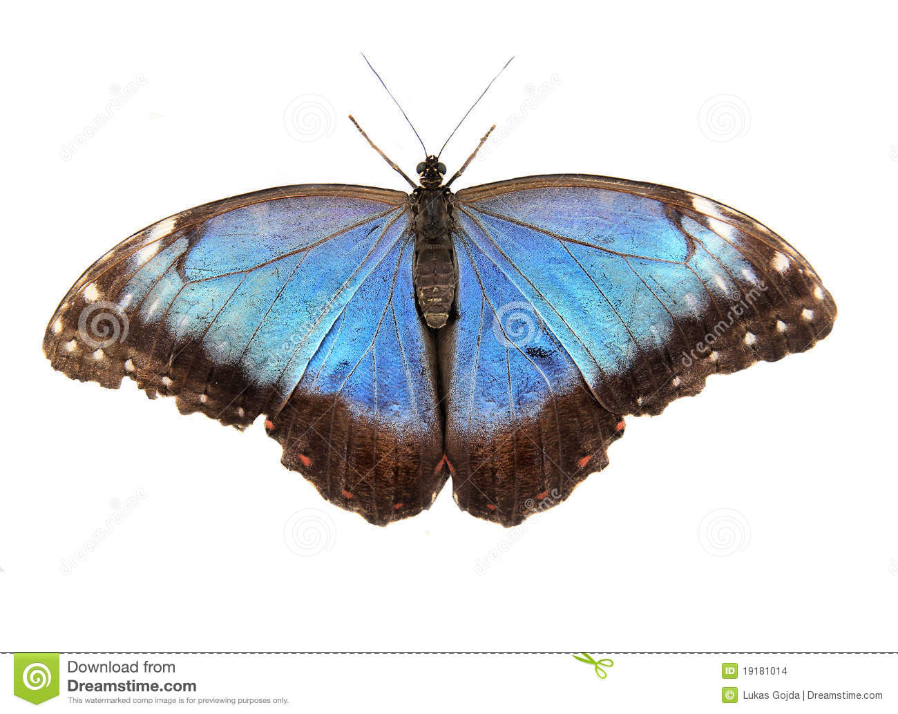 Exotic Butterfly Stock Images - Image: 19181014