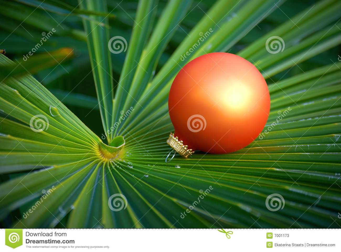 Exotic Christmas Stock Photos Image 7001173