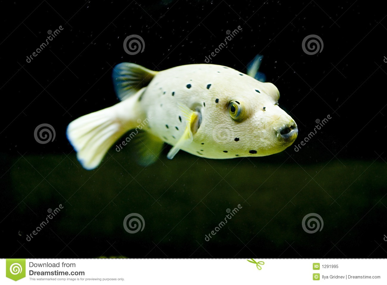 Exotic fish royalty free stock photo image 1291995 for Exotic pet fish