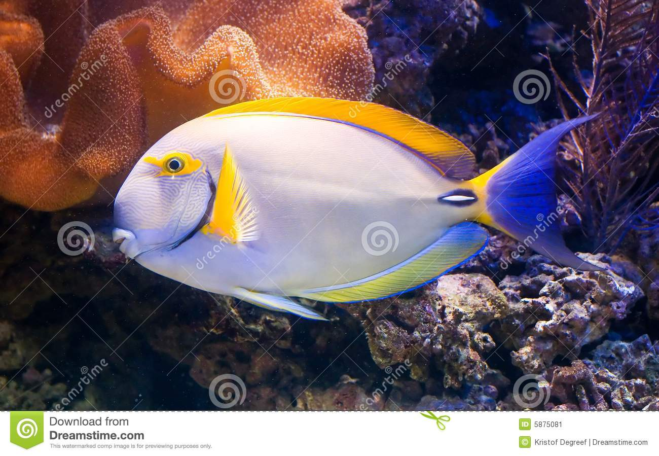 Exotic fish stock image image 5875081 for Exotic tropical fish