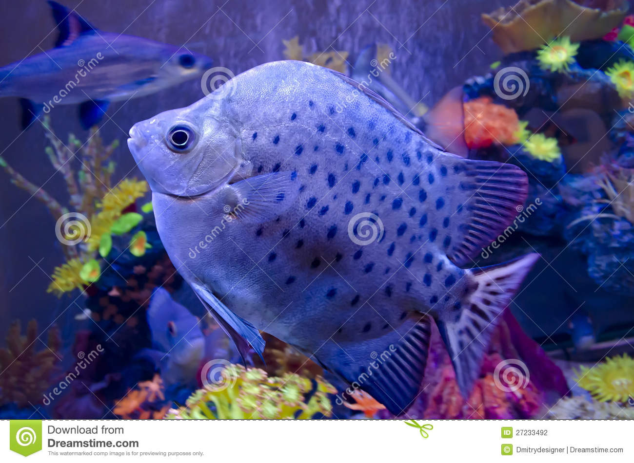 Exotic fish in aquarium stock photography image 27233492 for Exotic tropical fish