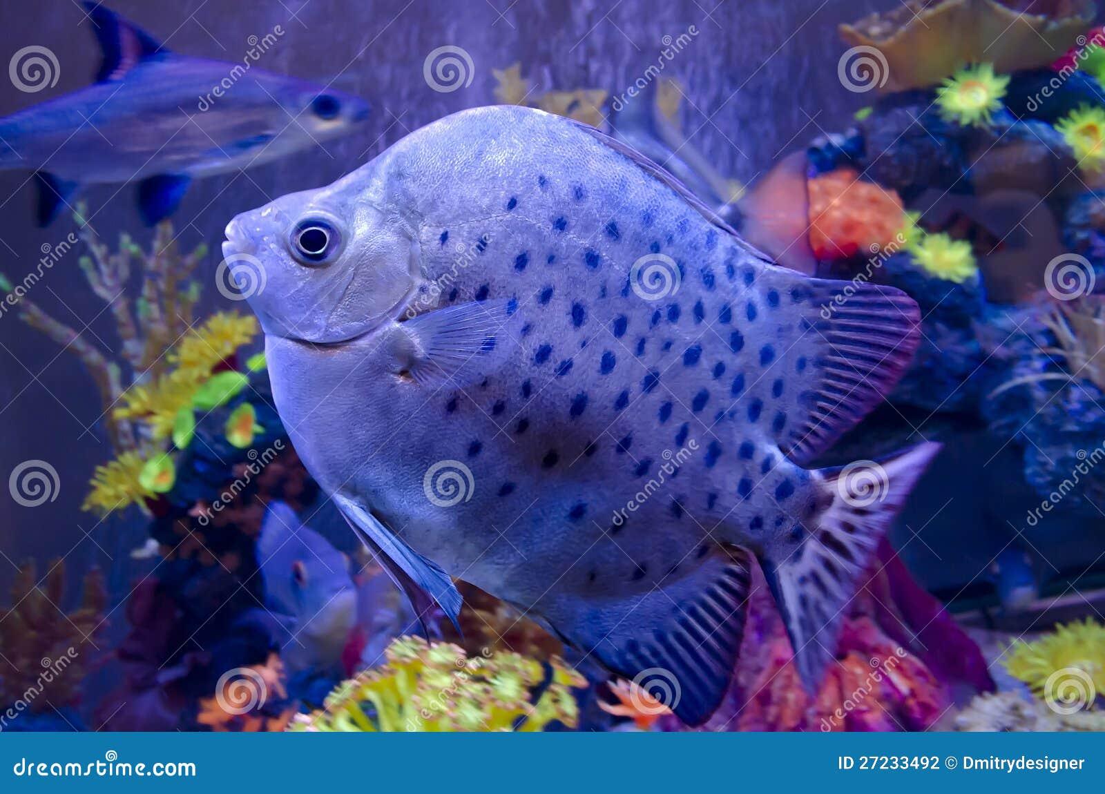 Exotic fish in aquarium stock photo image of close for Rare aquarium fish