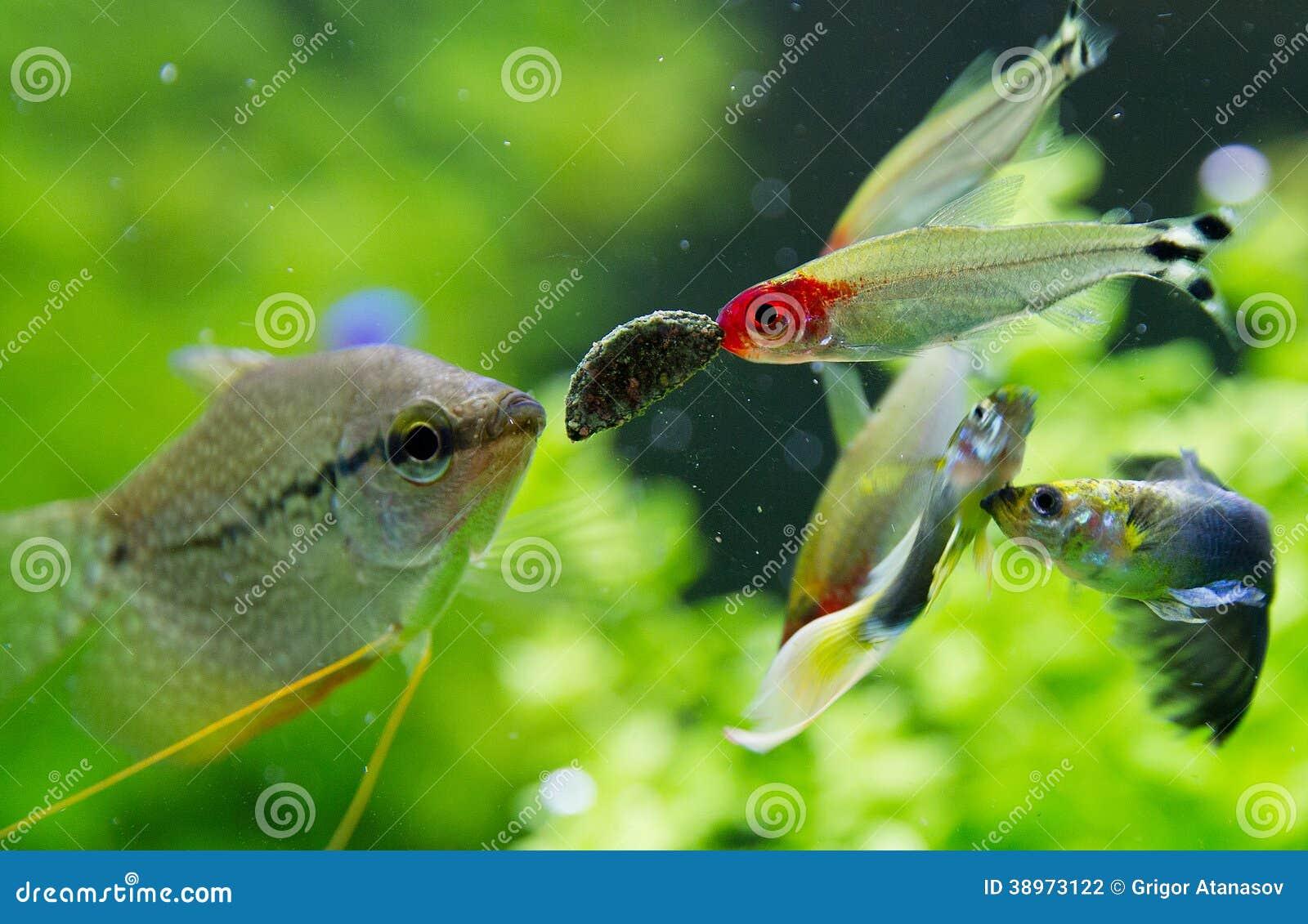 Freshwater aquarium fish exotic - Exotic Fish In Freshwater Aquarium