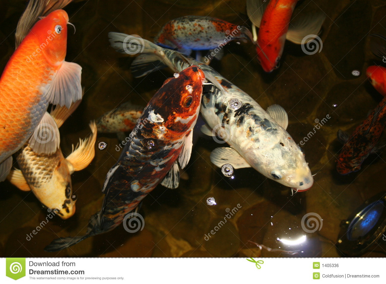 Exotic fish japan koi royalty free stock image image for Exotic koi fish