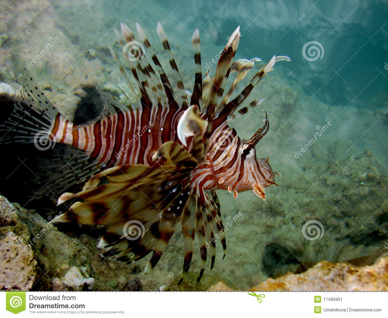 Exotic fish on red sea stock image image 17490951 for Red sea fish