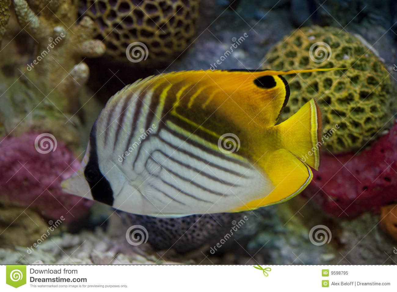 Exotic fish in tank royalty free stock photo image 9598795 for Exotic tropical fish