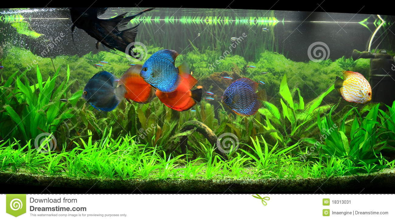 Exotic fish tank amazonian aquarium stock image image for Exotic fish tanks
