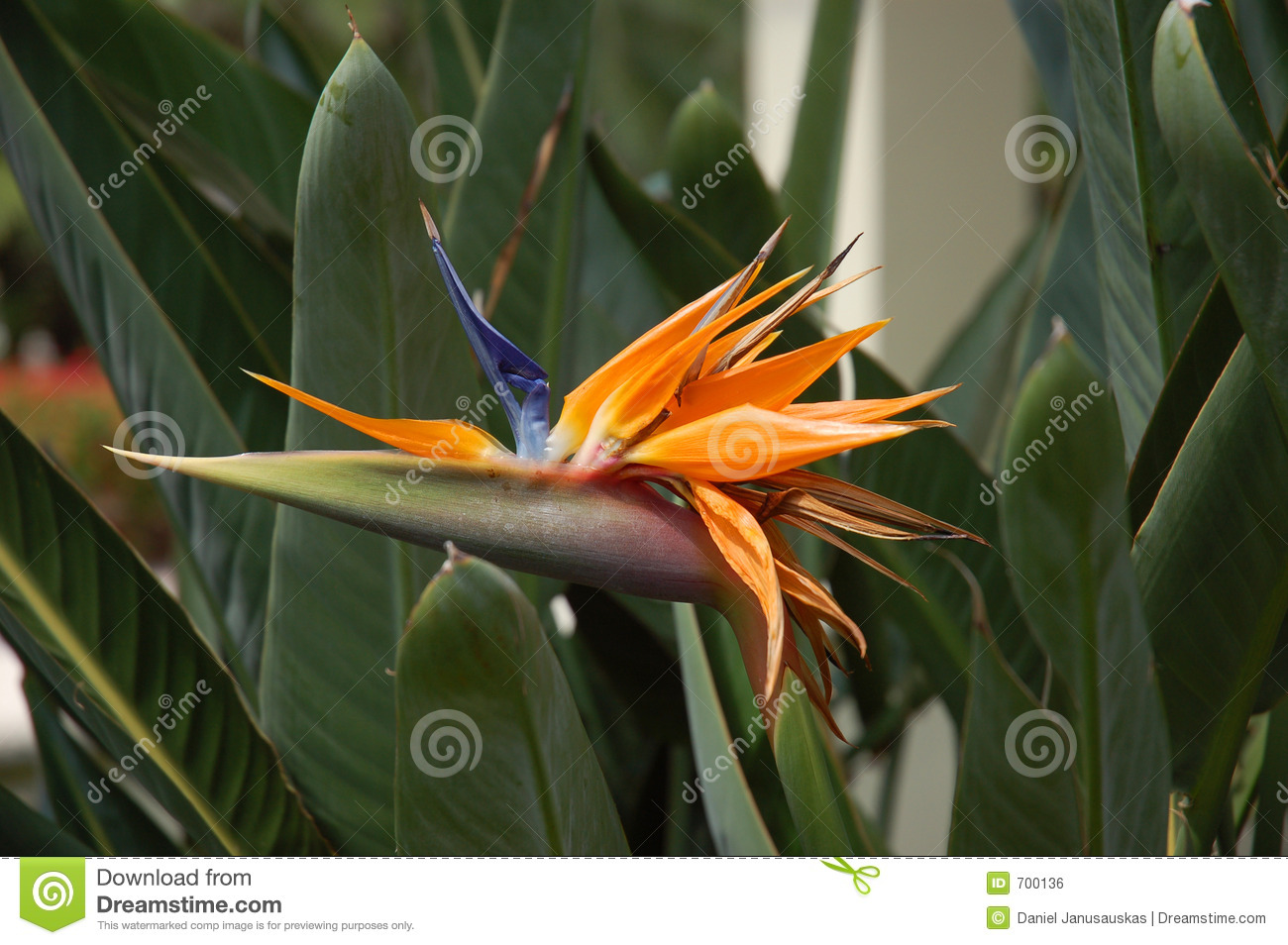Exotic Flower Stock Photo Image Of Pretty Interesting 700136