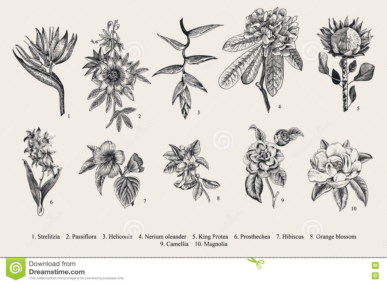 Botanical illustration black and white - photo#25
