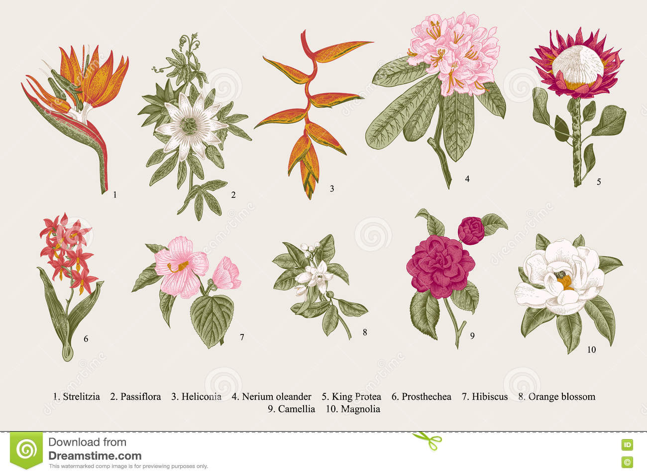 Exotic flowers set botanical vector vintage illustration for Botanic fleurs artificielles