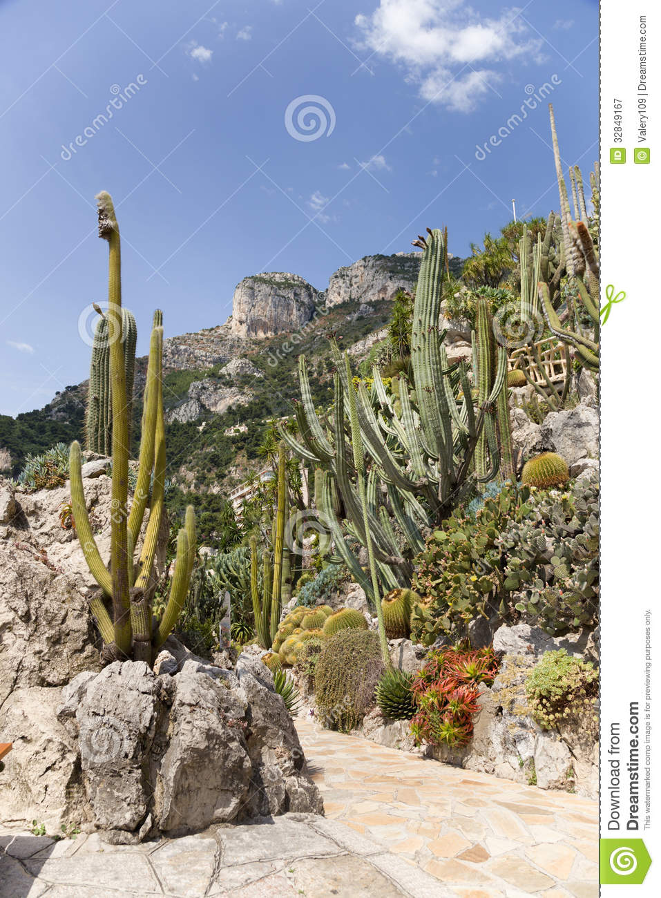 The exotic garden of monaco royalty free stock photography for Jardin exotique