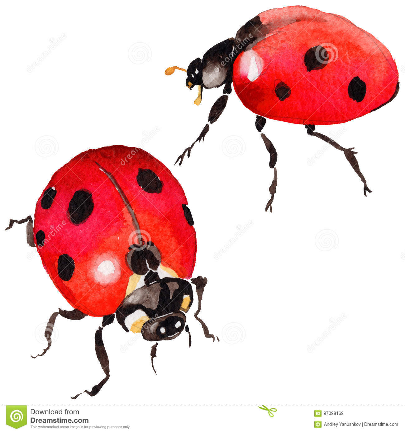 f264e91490d9e Exotic Ladybug Wild Insect In A Watercolor Style Isolated. Stock ...