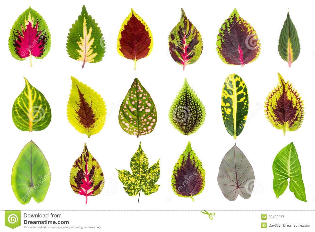 Exotic Leaf Collection Set Royalty Free Stock Photography